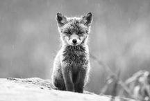 Animals / by Makaela M