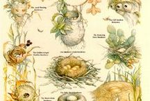 Birds & Nests & Houses & Feeders / Birds,  Nests, Houses, Feeders