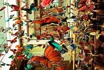 Moths & Butterflies. / by Cheryl Watson