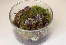 Terrariums ~ Moss~Lichen~Supplies / Terrarium Needfuls and beautiful creations