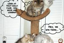Funny Pet Memes :D / funny pet meme's of cats, dogs and other animals