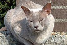 L I L Y  D O P P E L G Ä N G E R S / cats that look like my cat