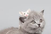 animals / Pets I