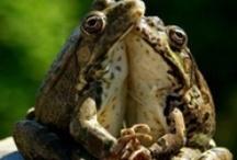 Froggy went a courtin' he did go, ah ha, ah ha      / by Mysistereli16