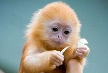 Apes & Monkeys - Primates / Primates - So human like / by Michelle North