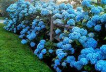 Garden -Jardín / Todas las ideas para tu jardín