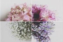 Winter Floral - Oriental