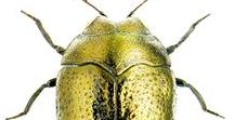 Bugs shiny