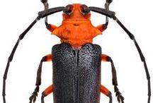 Bugs orange