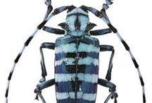 bugs blue