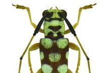 bugs green