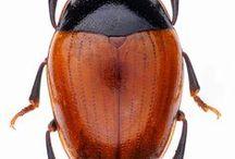 Bugs brown