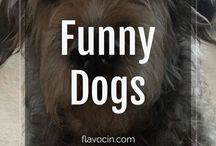 Funny Dogs / Funny Dog memes and pictures.