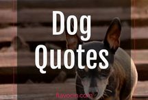Dog Quotes / Dog Quotes
