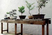 Garden / Garden, trees, flower, forrest, backyard, patio, terrace, balcony, outdoor