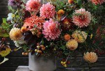 Garden & Flowers / Plantas, flores, diseño de jardines