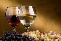 wine and  its vintage / www.italiavini.org