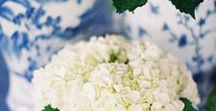 Beautiful Blooms / Fresh Flowers and Garden Inspiration