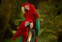 Thee Avian Creature