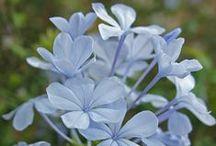 La Planta del Mes / Plant of the Month / Podrás conocer cada mes una especie botánica representativa de la flora ornamental de la Alhambra y Generale