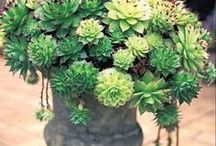 Container Gardens / Pretty flower pots and creative containers. / by Lashell Collins