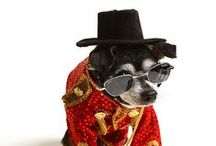 Dressed Up Dogs - Dress to Impress / Doggie outfits, fashion and Halloween Costumes