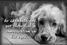 Old Dogs / Blessed are those that have earned the love of an old dog.