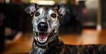 Pet Portraits / Pet Portrait sessions around Chicago