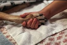 Against Animal Cruelty