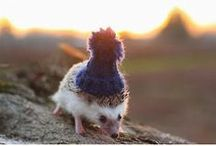 Hedgehog <3