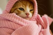 Cutee cats)