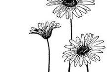 sketch/plants