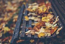 Golden Leaves / autumn, gold and brown, deep red and green, leaves and coffee, the start of a new year