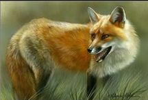 Fox World / All the different kinds of foxes that are all over the world! / by Patti Calhoun
