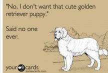 Hahaha and so true / by Milan H