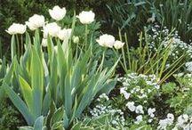 ✿ Garden dreams ✿ / Ideas for a beautiful DIY garden. Flowers, outdoor furniture and garden design for inspiration.