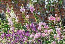 romantic garden plants