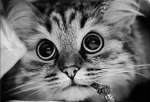 Cute !*!*!* =o)