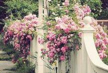 Deco: garden inspiration