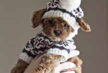 Best dressed pet / Ideas for your furry friends. Sign up at www.wonderland.org.uk
