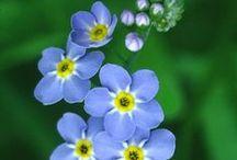 kwiaty (flowers) / Zapisuje tu piny na których są kwiaty, ale bardzo ładne i wyjątkowe kwiaty które są bardzo rzadkie ale też i popularne. Kategoria to ogrodnictwo.