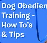 Dog Obedience Training - How To's & Tips