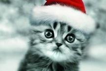 Animal Cuteness / Animal love! Cuteness overload :)
