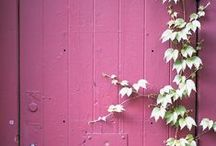 Colours - Purple/ Mulberry/ Magenta