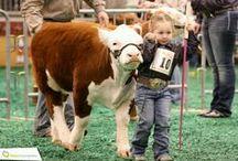~ Livestock ~