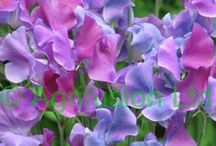 Flower power! / Flowers make my heart sing / by Linda Constantine