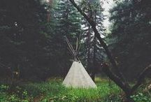 NATURE / The beauty of nature // Camping // Trees