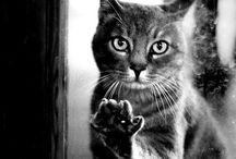 Black&white cats
