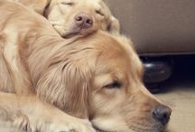 Dogs I Love