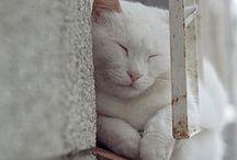 Don Gato / gatos